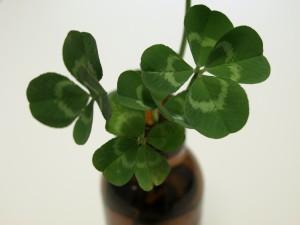 幸せの四つ葉のクローバー